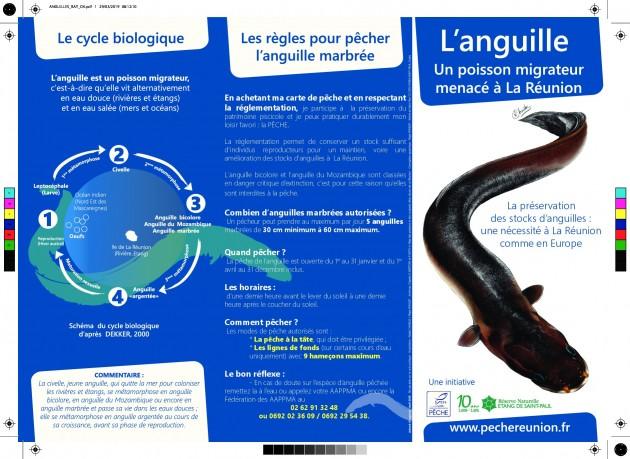 L'anguille, un poisson migrateur menacé à La Réunion
