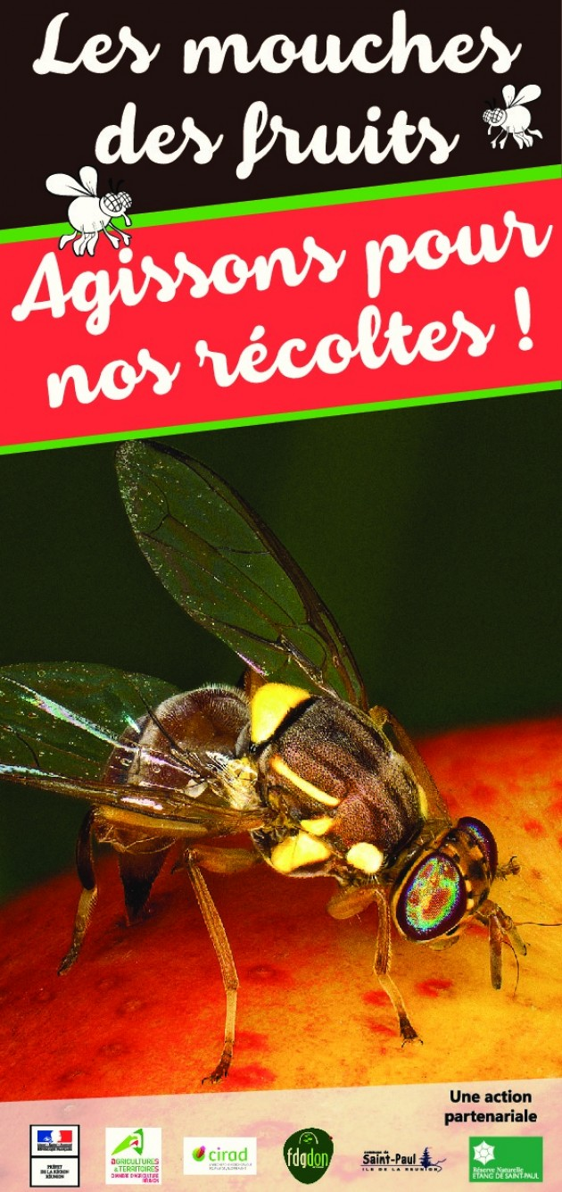 La mouche des fruits: Agissons pour nos récoltes