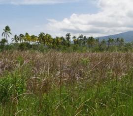 Les plantes de la forêt sèche