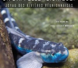 """Intermedes nature """"On l'appelle bichique, joyau des rivières réunionnaises"""