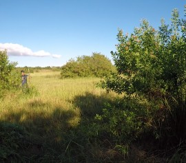 Chantier nature, l'expérience éco-citoyenne