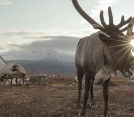 IMN 2021 - Coup de chaud pour les rênes de Sibérie