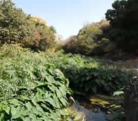 Le site de la Ravine Divon - Visite guidée pédestre