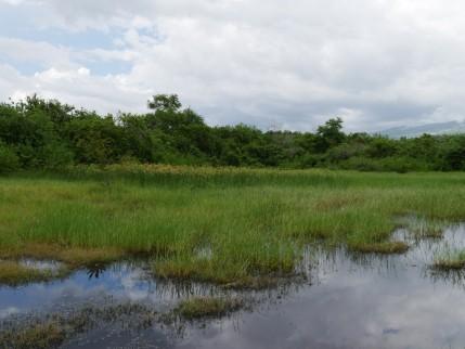 L'agence française de la biodiversité soutient le projet de restauration de la prairie humide